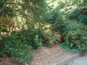 le sous-bois du parc Sutter